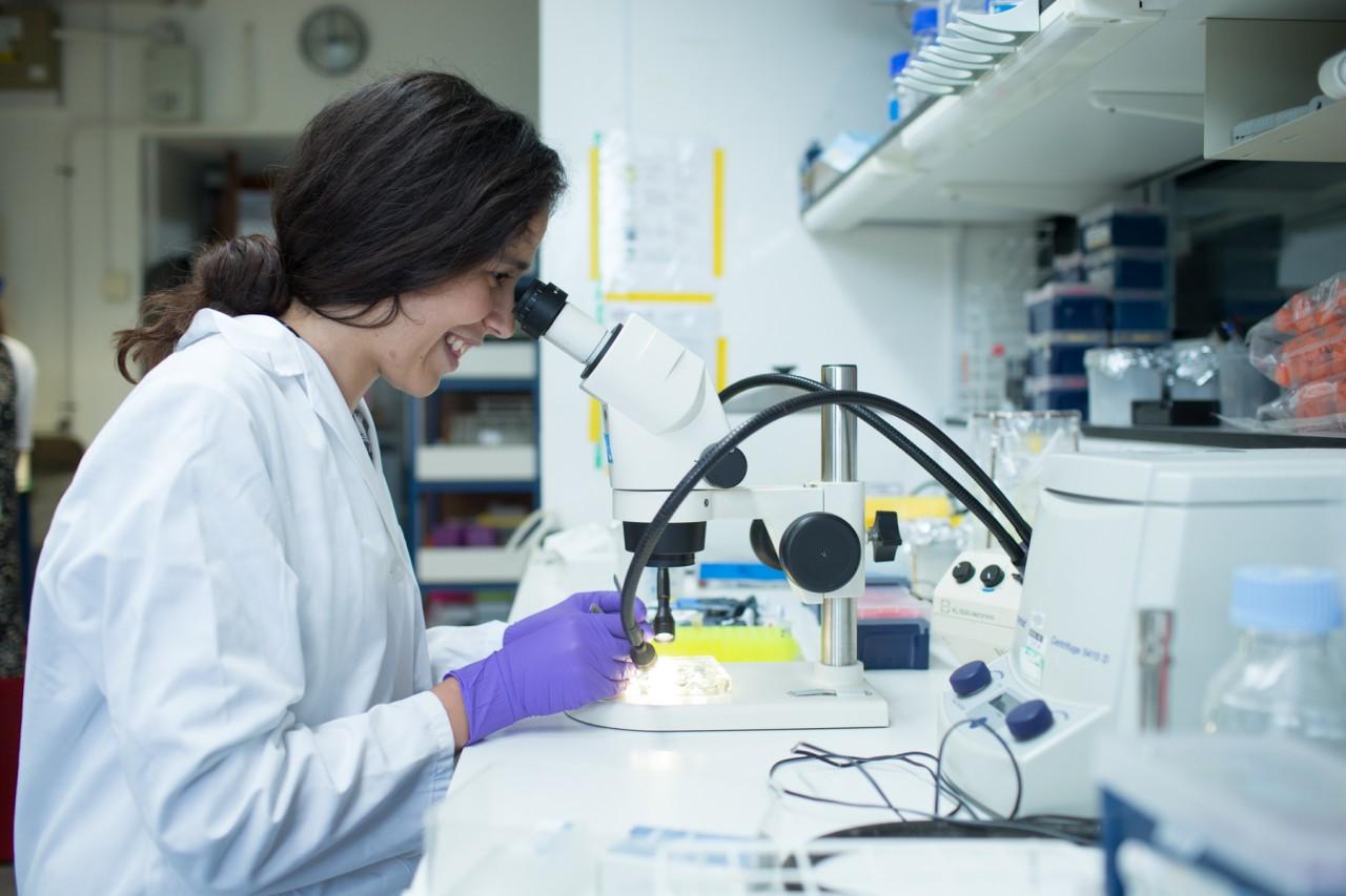 Consultation on non invasive prenatal testing